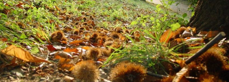 excursió Montseny castanyers