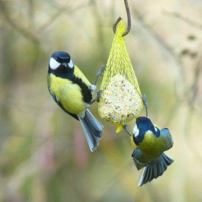 Com fer menjadores per a ocells