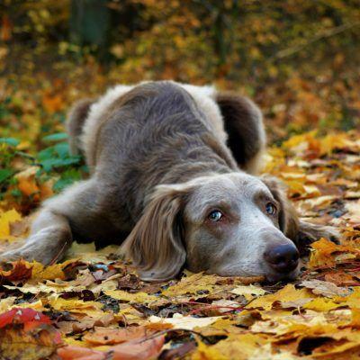 La castanyada amb mascota-del 31 d'octubre al 3 de novembre