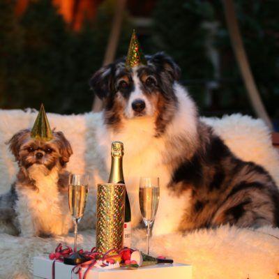 Cap d'any amb mascota