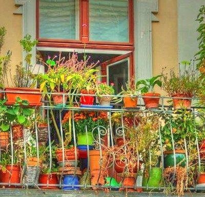 Com fer un hort al balcó i posar-lo ben bonic