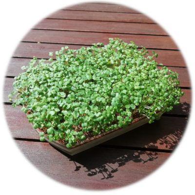 germinat-en-safata-Fundesplai-400x400.jpg?profile=RESIZE_710x