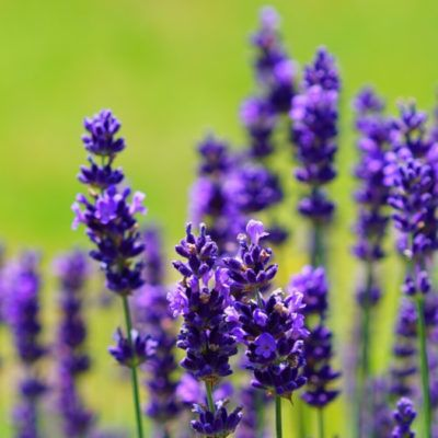 20 plantes medicinals de primavera