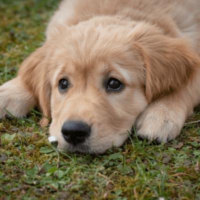 Pont de la diada amb la teva mascota – del 10 al 13 de setembre