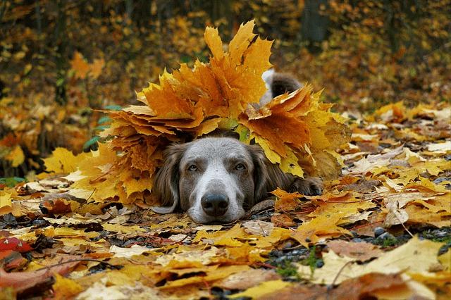 La castanyada amb mascota-del 30 d'octubre a l'1 de novembre