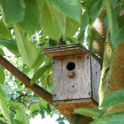 Com fer caixes niu per a ocells