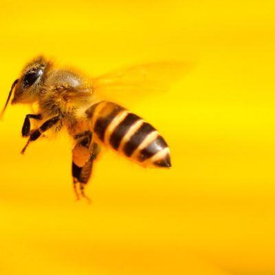 9 idees per conèixer i ajudar a les abelles